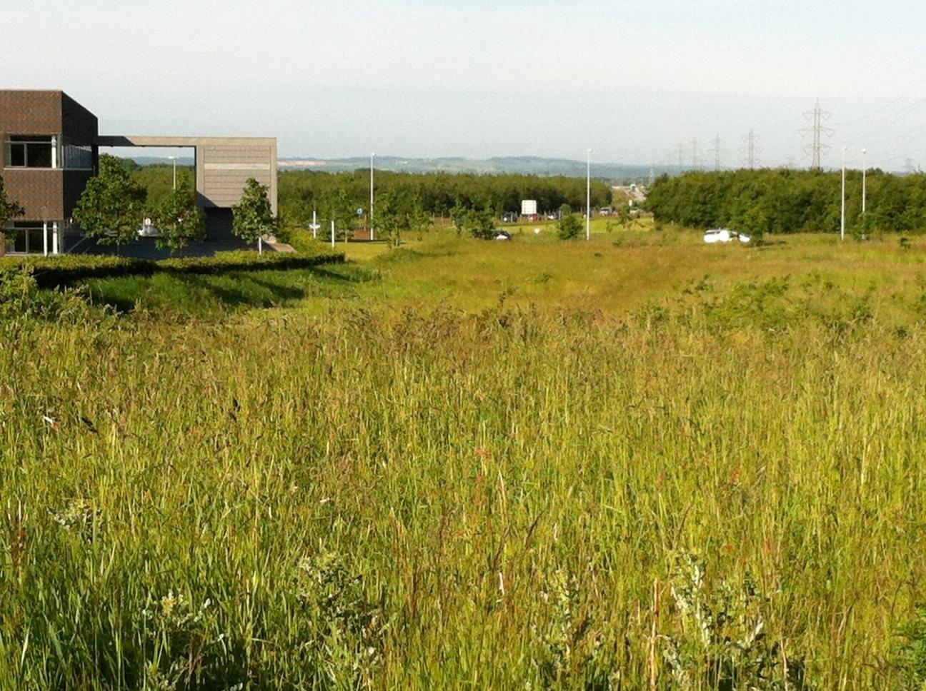 Erhvervsgrund på Sintrupvej i Brabrand - Grund